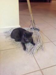 My first mop ride.