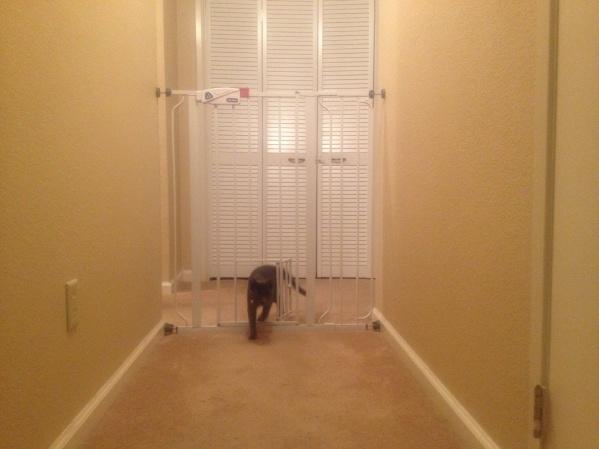 My own cat door.