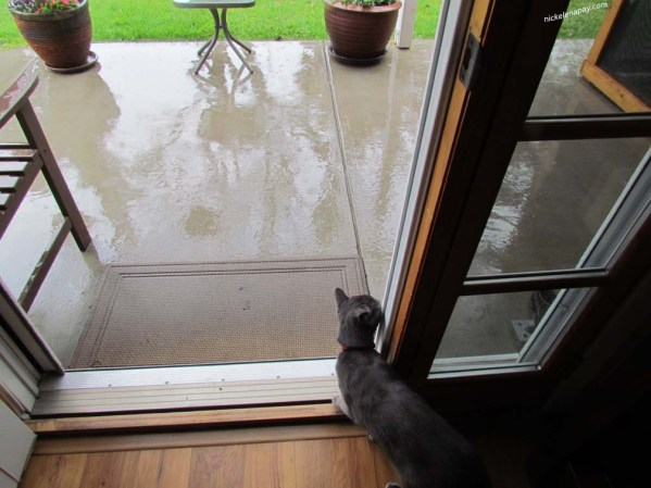 The humans left the door wide open, they assumed I wouldn't go out in the rain